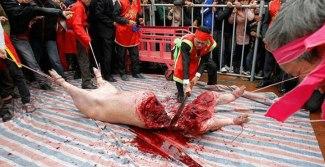 brutally-killed-animal